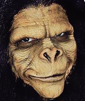 Monkey Adult