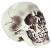 Realistic Skull Decoration