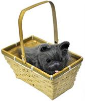 Toto With Basket Economy