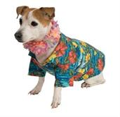 Pet Hawaiian Costume
