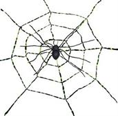 Spiderweb With Spider
